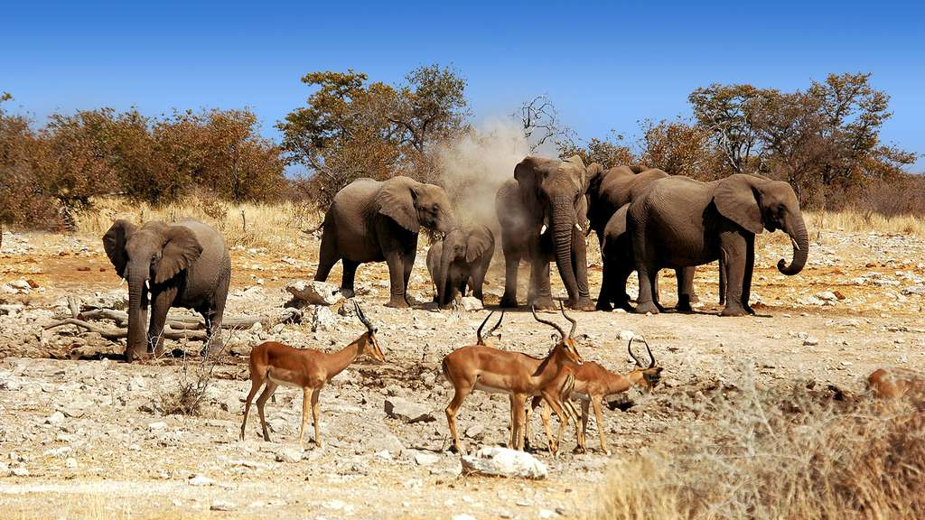 Le parc national d'Etosha et sa biodiversité d'une étonnante richesse