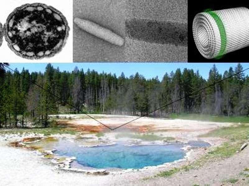 L'image montre une source chaude dans le parc national Yellowstone, Montana, un site où des bactéries sulfureuses vertes contenant des chlorosomes peuvent être trouvées dans les tapis aux couleurs vives. En haut à gauche on voit une micrographie prise au microscope électronique d'une de ces bactéries, Chlorobaculum tepidum. L'image au centre est une micrographie électronique d'une chlorosome. Tout à droite on peut voir un modèle moléculaire de la chlorophylle dans le chlorosome. Les molécules de chlorophylle individuelles sont illustrées en vert, leurs queues hydrophobes pointant vers l'extérieur. © Donald Bryant, Penn State University