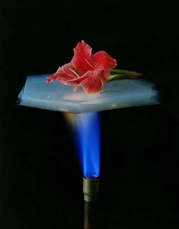 Une rose reste intacte sur un bloc d'aérogel chauffé par un bec Bunsen en raison du caractère d'isolant thermique de l'aérogel. Crédit : Lawrence Berkeley National Laboratory.