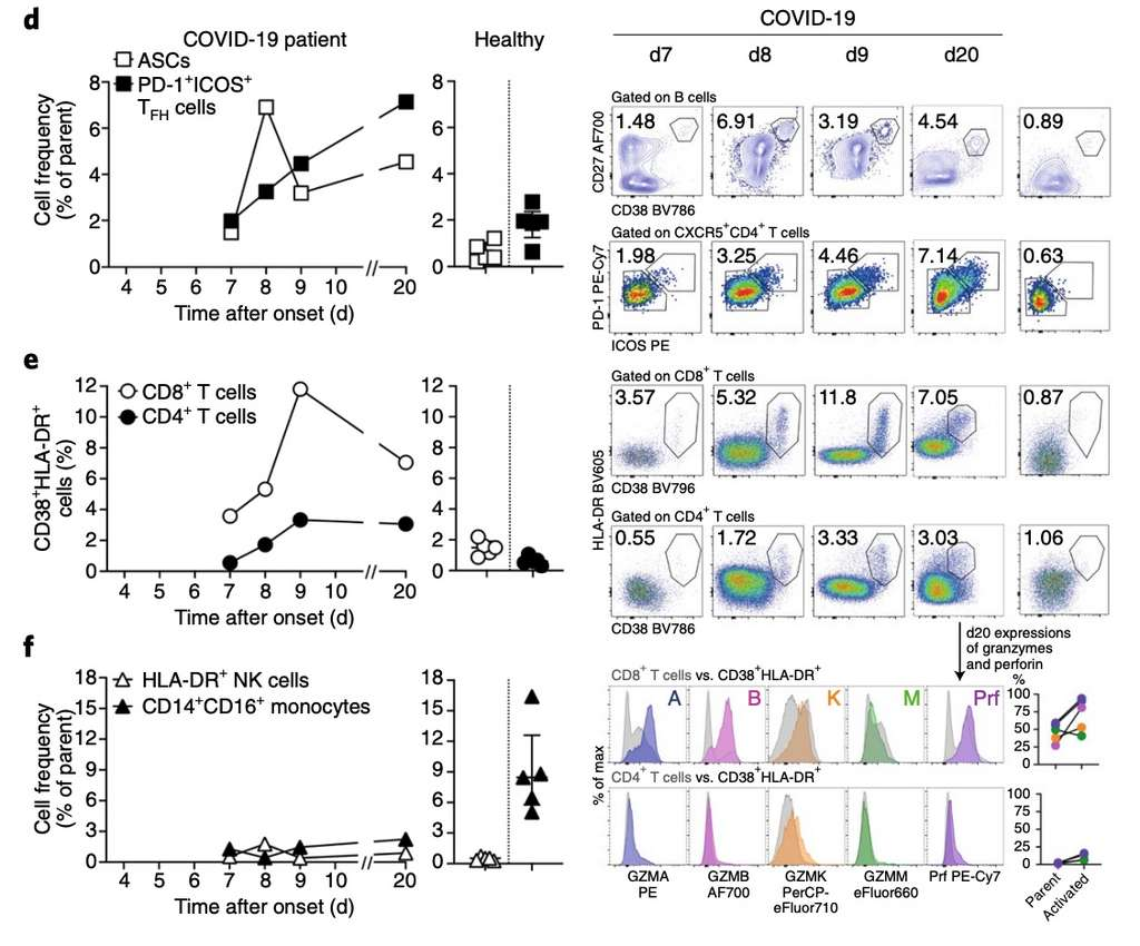 Les types cellulaires activés suite à une infection par le coronavirus responsable du Covid-19. À gauche, les graphiques montrent la fréquence d'apparition des cellules en fonction du temps. À droite, les figures montrent des résultats de cytométrie en flux qui caractérisent les populations cellulaires en fonction de marqueurs qui leur sont propres. d) L'activation des plasmocytes et des lymphocytes Tfh. e) Il s'agit de l'activation des lymphocytes T4 et T8. f) Il s'agit de l'effet de l'infection sur deux cellules de l'immunité innée, les monocytes et les natural killer. © Katherine Kedzierska et al., Nature Medecine, 2020