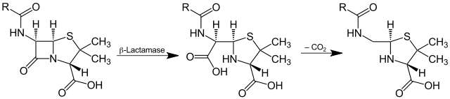 La bêtalactamase est une enzyme capable d'hydrolyser un antibiotique pénicilline (de la famille des bêtalactamines) selon la réaction ci-dessus. © Jü, Wikipedia, DP