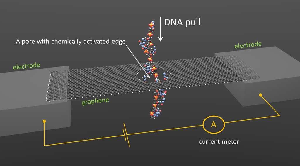 Un nanoruban de graphène est collé entre deux électrodes et soumis à une différence de potentiel alors qu'un ampèremètre mesure des variations de courants. Ces variations se produisent lorsqu'un brin d'ADN (DNA, en anglais sur l'image) traverse un pore portant des bases bien spécifiques de l'ADN (A pore with chemically activated edge). © Smolyanitsky/NIST
