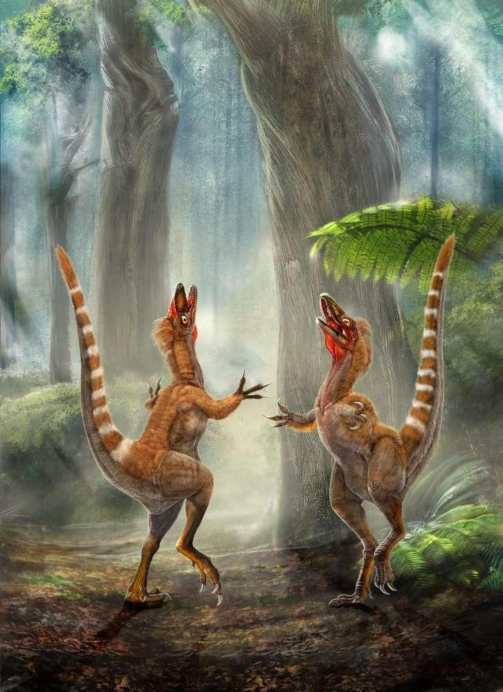 Deux Sinosauropteryx dans une forêt du Crétacé. Leur plumage est coloré. Une étude au microscope électronique a fourni des indications sur les couleurs des plumes des dinosaures : noir, blanc et brun-roux. © Chuang Zhao et Lida Xing
