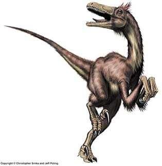 Un Velociraptor, cousin du tyrannosaure, théropode comme lui et qui a comme lui hanté les chaudes contrées de la fin du Crétacé. © Christopher Srnka/Jeff Poling