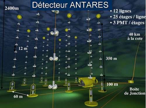Antares est un télescope à neutrinos situé à 2.400 mètres de fond. Il occupe une surface d'environ un dixième de km2. Dans le futur il sera remplacé par un détecteur de taille kilométrique en Méditerranée. Le schéma montre les 12 lignes de photomultiplicateurs (PMT) déployées à 40 km de la côte. © CPPM