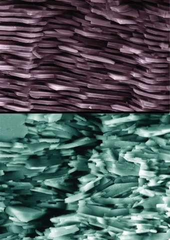 Sur cette image, on peut observer la structure de la nacre naturelle (en haut) et de la nacre synthétique (en bas), à la même échelle. La structure en empilement de briques est bien visible dans les deux cas. Sur le cliché du bas, le parcours tortueux effectué par la fissure est bien observable. © Sylvain Deville, Florian Bouville