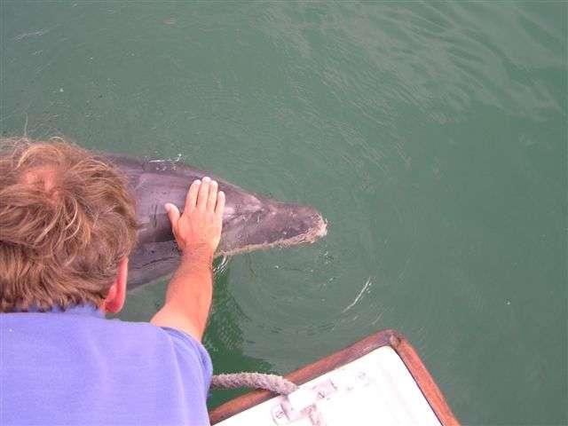 Jean Floc'h est un dauphin solitaire. Il cherche le contact avec l'Homme. Célèbre à Brest, il se laisse approcher, nage et joue avec les humains. © CNQuiberon
