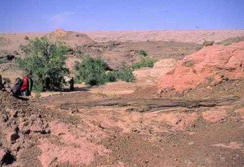 Un tronc d'arbre fossilisé, vieux de 25 millions d'années, couché dans le gisement de Lundo. © 2004 MPFB (POA)