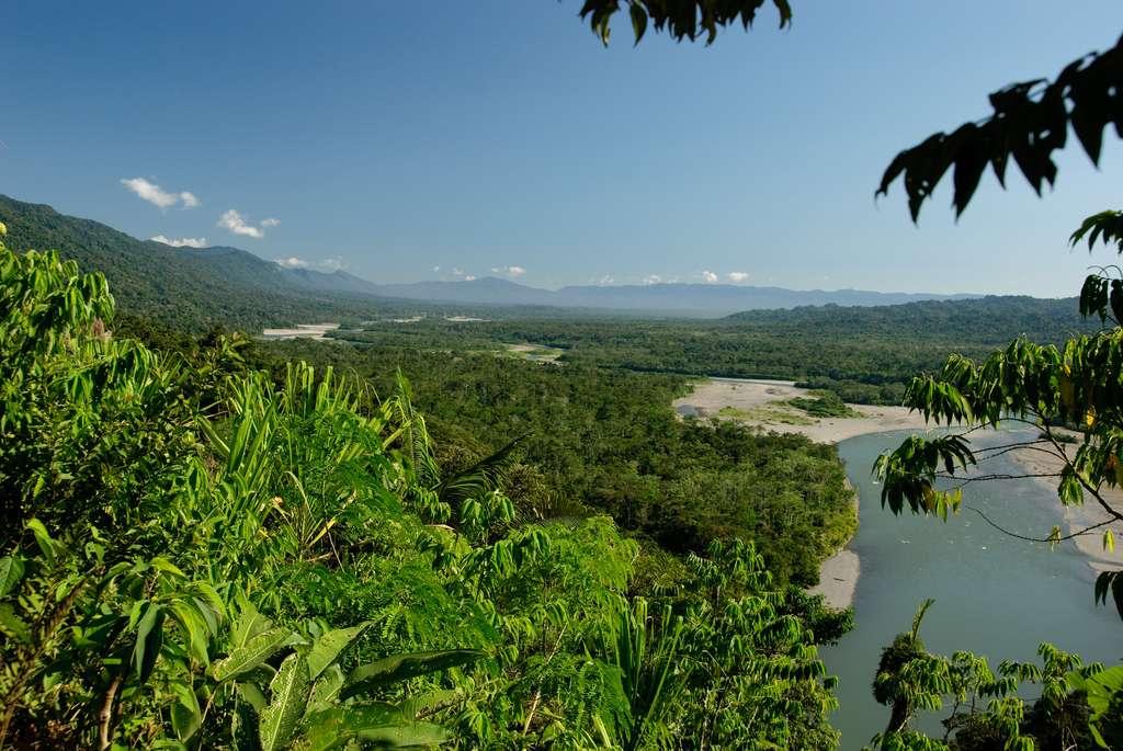 Le parc national de Manú, situé dans le sud-est du Pérou, héberge une biodiversité extraordinaire. On y trouve entre autres des tapirs, des jaguars, de très nombreuses espèces d'oiseaux et surtout des millions d'insectes. C'est aussi un des rares endroits de la planète qui contient encore des forêts primaires. Francis Hallé, Luc Jacquet et son équipe ont filmé certaines séquences d'Il était une forêt au sein de ce parc magnifique. © funkz, Flickr, cc by 2.0