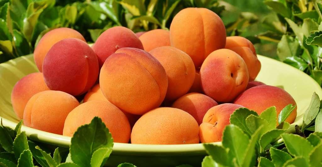 L'abricotier : variétés, feuilles et taille. Ici, une coupe d'abricots Bergeron. © Rita E, Pixabay, DP