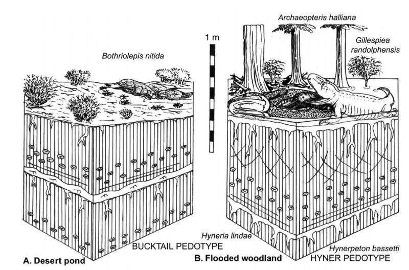 Pour Alfred Romer, les poissons seraient sortis de l'eau à la suite de changements drastiques des conditions environnementales. Ces derniers auraient causé l'assèchement des points d'eau (à gauche). Selon Gregory Retallack, les poissons auraient développé de nouvelles structures (pattes et cou mobile) leur permettant de sortir de l'eau et de profiter de leur environnement (à droite). © University of Oregon