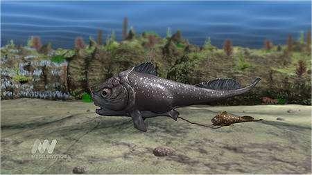 La maman des poissons (Materpiscis) vient d'accoucher d'un petit, encore accroché par un cordon ombilical. Extrait d'une vidéo réalisée par le Museum Victoria. Cliquez sur l'image pour accéder au site et à d'autres images. © Museum Victoria