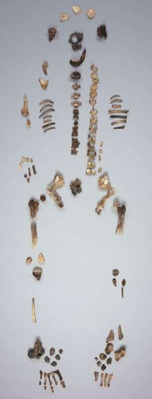 Fig. 7 - Le squelette d'Arégonde a été l'objet d'analyses, par l'angle de l'anthropologie et de la génétique. © Loïc Hamon, MAN