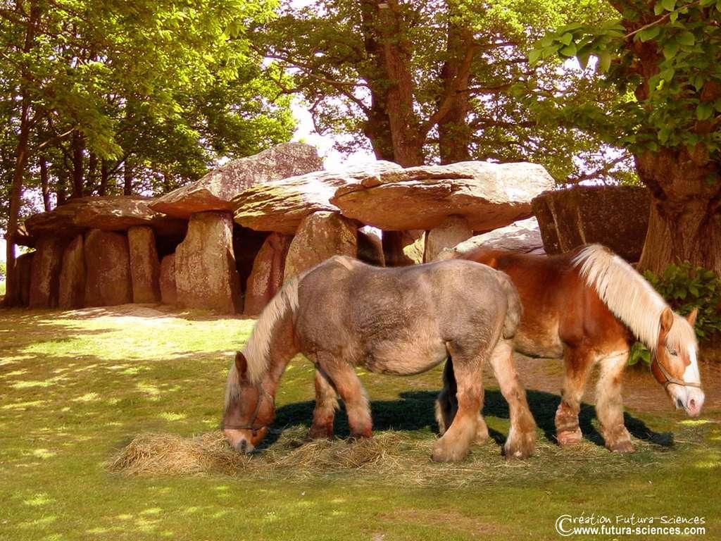 Cheval : Percheron