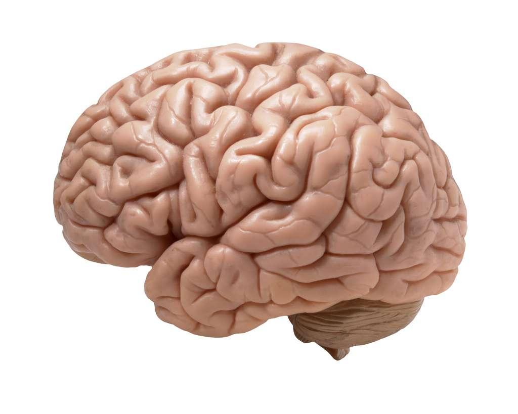 On ignore encore les raisons physiologiques directes de cet avantage, mais les femmes semblent moins sensibles aux altérations génétiques concernant les gènes impliqués dans le développement du cerveau. © _DJ_, Flickr, cc by sa 2.0
