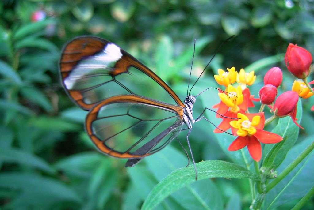 Des écrans inspirés des ailes transparentes d'un petit papillon