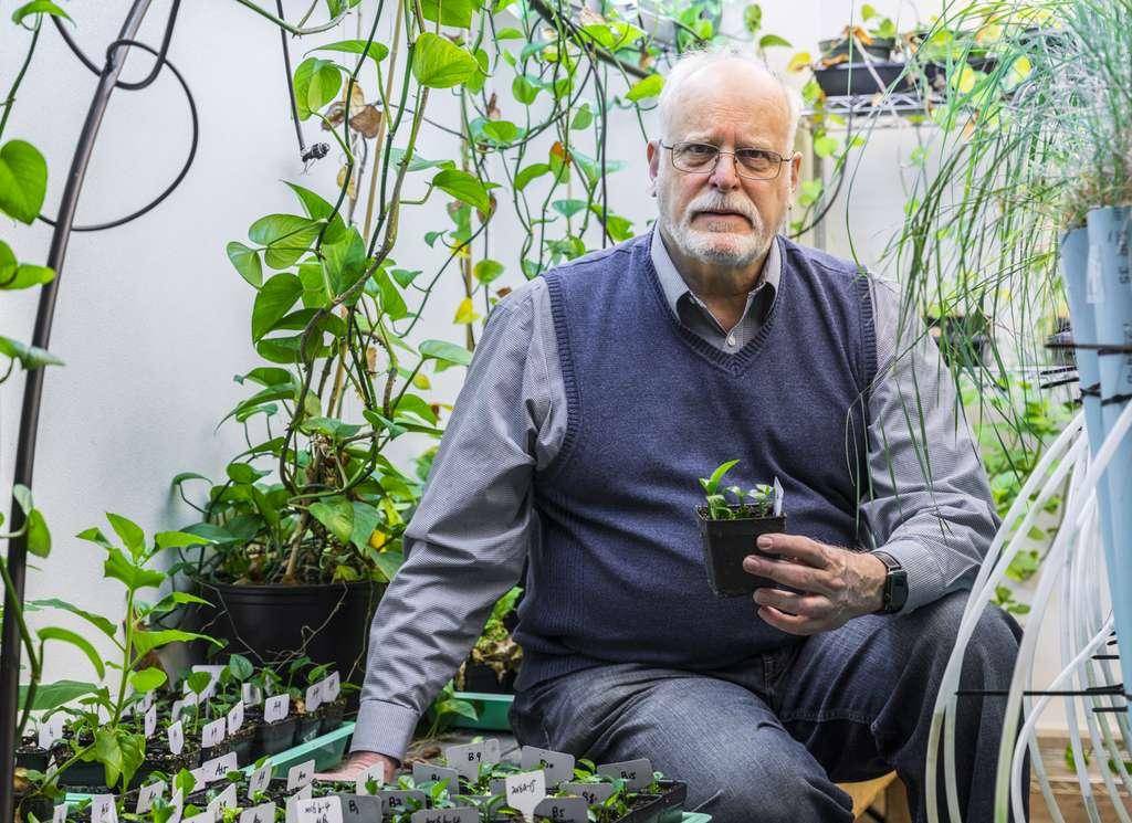 Stuart Strand, professeur à l'université de Washington, avec un pot de lierre du diable génétiquement modifié. © Mark Stone/University of Washington