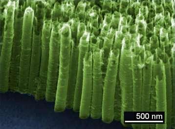 La forêt de nanotubes de TiO2 captant les molécules de TNT en suspension dans l'air. © Fabien Schnell, NS3E