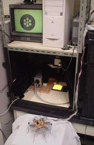 Entre la moisissure-pilote et le robot se trouve – pour l'instant – un ordinateur chargé de restituer les signaux lumineux perçus par le robot et, en retour, les mouvements à effectuer.