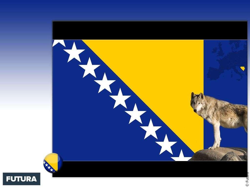 Drapeau : Bosnie-Herzégovine