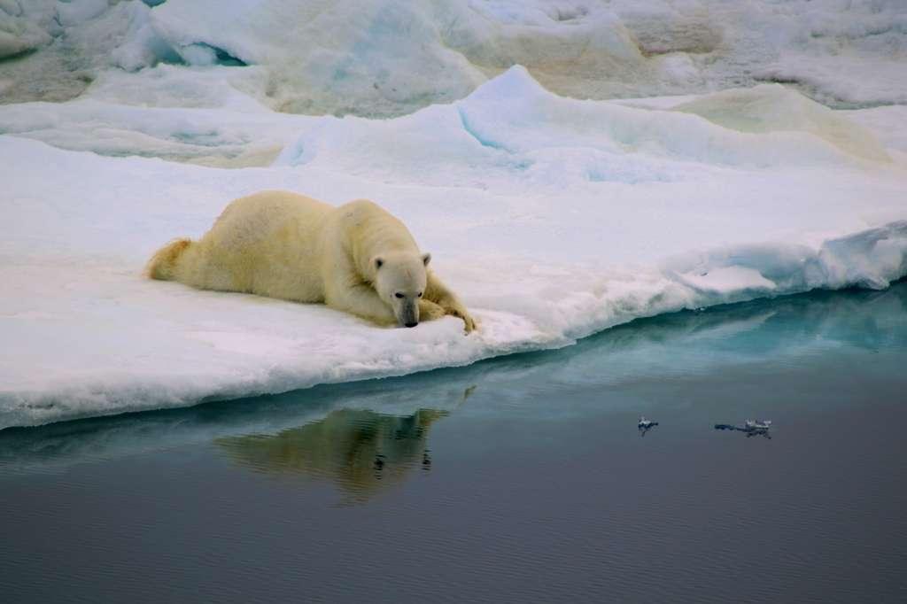 Photo intitulée Respiro, prise dans le détroit de Fram, près de la côte est du Groenland. © Antonia Doncila, université d'Édimbourg