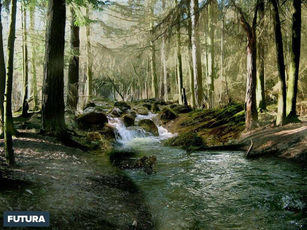 Forêt de Grande-Bretagne