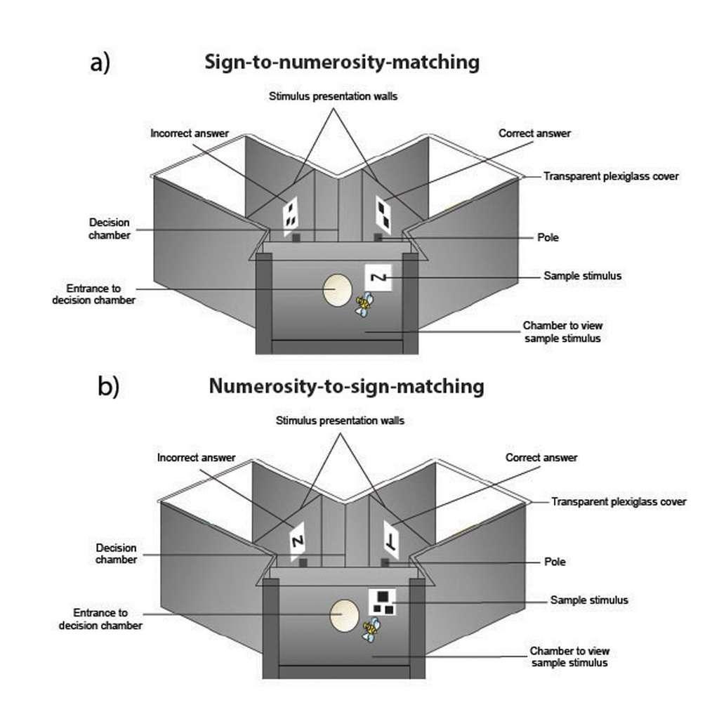 Les abeilles ont été formées dans un labyrinthe en forme de Y. Dans le cas a), il leur était présenté un symbole à l'entrée auquel elles devaient, une fois à l'intérieur, associer un nombre. Dans le cas b), c'est à l'inverse un nombre qui leur était présenté et elles devaient ensuite lui associer un symbole. © RMIT Australia
