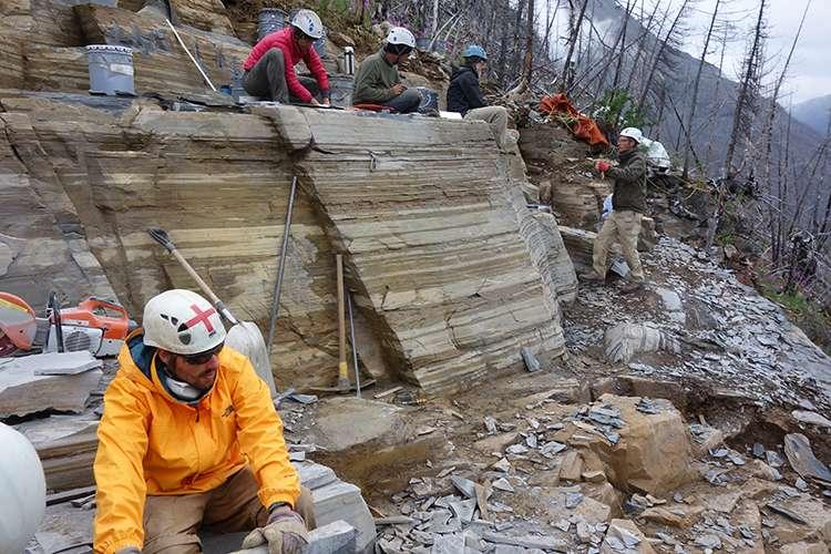 Le paléontologue Cédric Aria (à gauche) et d'autres membres de son équipe explorant les couches de schiste du site de la carrière de Marble Canyon dans l'espoir de révéler de nouveaux fossiles. © Jean-Bernard Caron