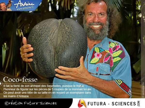 Seychelles : Antoine et le coco-fesse