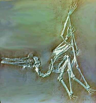 Ptérosaure. © DR