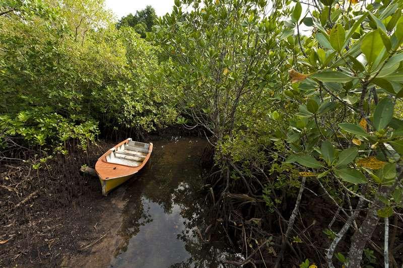 Les mangroves protégeant les côtes. © Alexis Rosenfeld, reproduction interdite