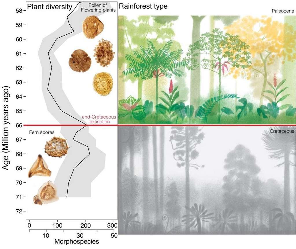 Composition de la structure forestière sous les tropiques sud-américains avant et après l'impact de l'astéroïde. © Mónica Carvalho et al, science, 2021
