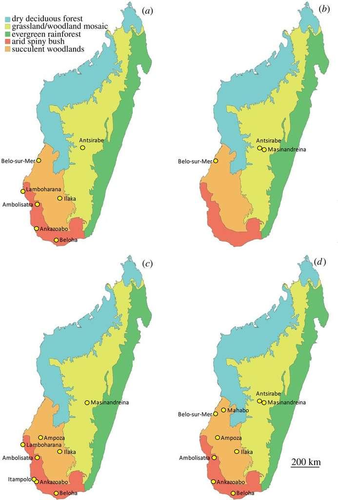Répartition des quatre espèces d'oiseaux-éléphants de Madagascar identifiées dans l'étude. Les couleurs rouge, orange, vert, jaune et bleu représentent différents écosystèmes, respectivement : broussailles épineuses en milieu aride, boisé, forêt tropicale, mélange de forêts et de prairies, forêt décidue (arbres à feuilles caduques). Les cartes a, b, c et d correspondent respectivement à M. modestus, A. hildebrandti, A. maximus et V. titan, dont la présence est indiquée par des points jaunes. © James Hansford, Samuel Turvey, Royal Society Open Science, 2018