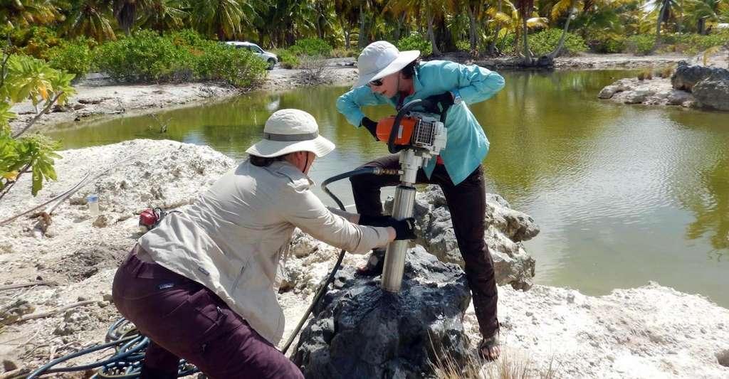 Les chercheurs de Georgia Tech (États-Unis) en train de percer un fossile de corail vieux de 5.000 ans sur l'île de Kiritimati (Pacifique Nord). © Georgia Tech