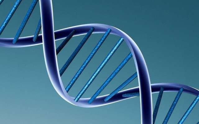 La structure de l'ADN : une double hélice