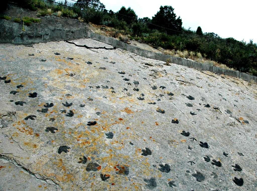 Des traces de pas de dinosaures dans le grès du Dakota, datées du Crétacé Inférieur, sur le célèbre site Dinosaur Ridge, non loin des endroits où ont été repérées les traces de l'étude rapportée ici. © James St. John, Flickr, CC by-nc-sa 2.0