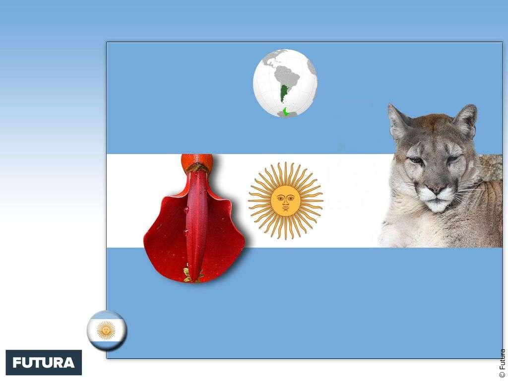 Drapeau : Argentine
