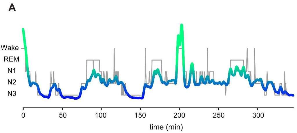 L'intensité du rythme alpha varie tout au long de la nuit et la personne endormie a le plus de chance de se réveiller lorsque son intensité est maximale (wake). © Plos One