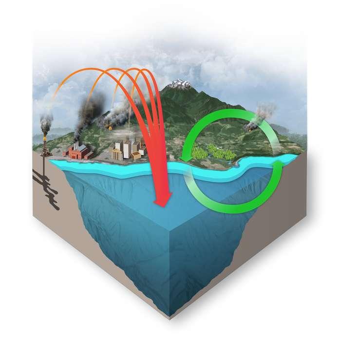 L'activité industrielle en bord de mer rejette du CO2 dans l'atmosphère. Les échanges gazeux air-mer sont amplifiés et le carbonate océanique en absorbe une grande quantité (matérialisée sur le schéma par la grande flèche rouge). Par ailleurs, le rejets des produits agricoles favorisent les efflorescences algales, et accroît la consommation de gaz carbonique par la pompe biologique (cycle vert). © PMEL