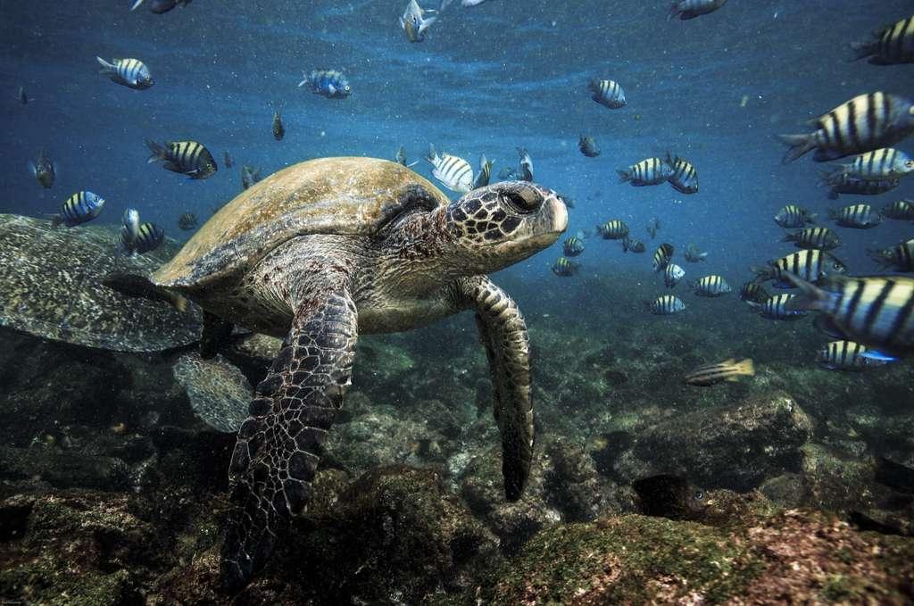 Les eaux profondes des Galapagos favorisent des habitats les plus diversifiés de l'archipel et permettent la biodiversité des îles. © Longjourneys, Adobe Stock