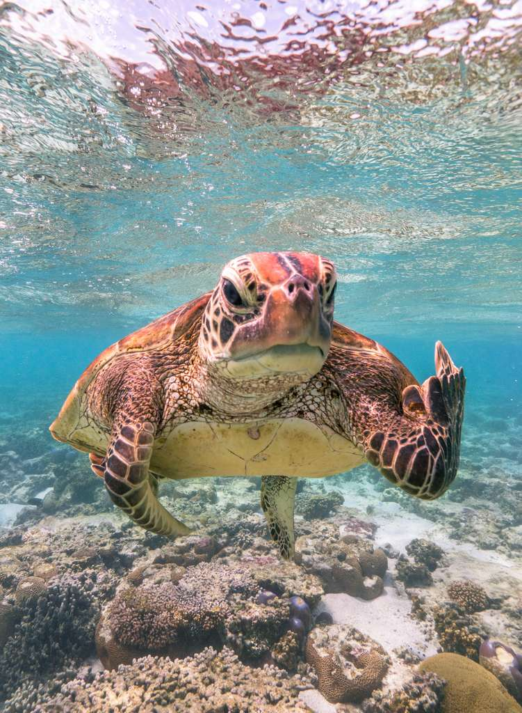 « Terry the Turtle flipping the bird. » © Mark Fitzpatrick, Comedy Wildlife Photography Awards 2020