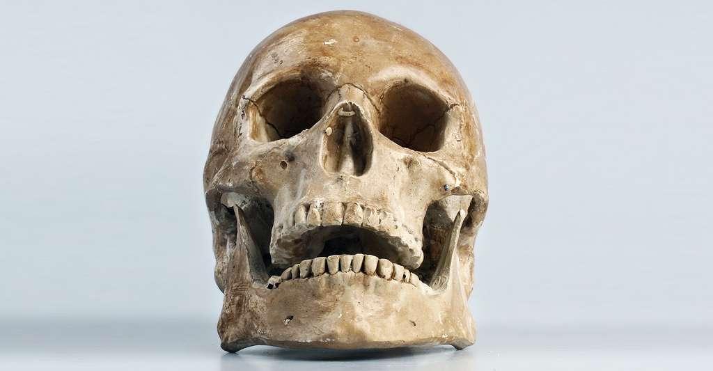La découverte du cerveau à travers les âges. © Flachovatereza, CCO