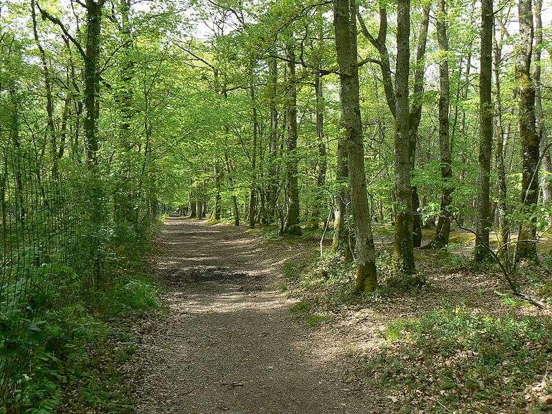 Les arbres de la forêt. © Pradigue, Wikipédia, Creative Commons