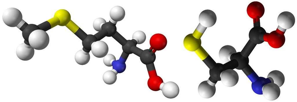 La méthionine (à gauche) et la cystéine (à droite) sont les deux acides aminés retrouvés dans les organismes vivants qui possèdent un atome de soufre (en jaune). © Domaine public