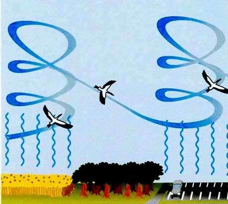 Ascendants et vol plané. © Reproduction et utilisation interdites