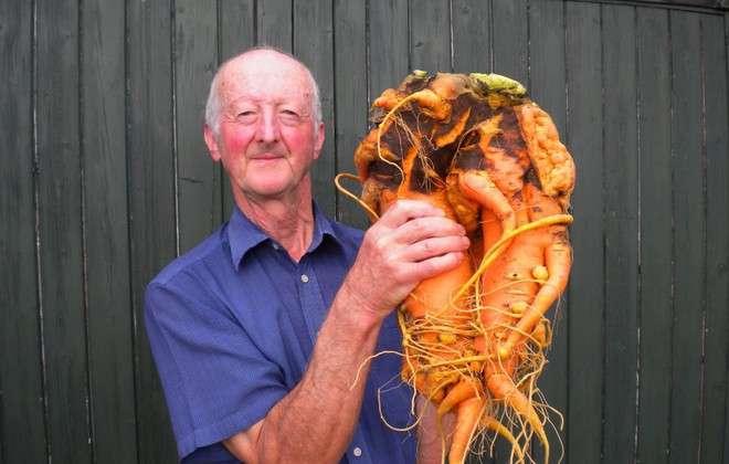 Pete Glazebrook cumule les records des plus gros légumes du monde. Pesant 9,1 kg, cette carotte détient depuis 2014 le record absolu de la plus grosse. © Guinness World Records