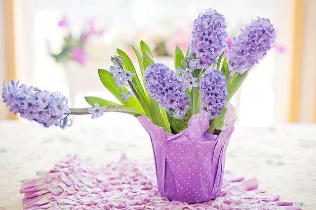 Jacinthes mauves au parfum délicat. © JillWellington, Pixabay, DP
