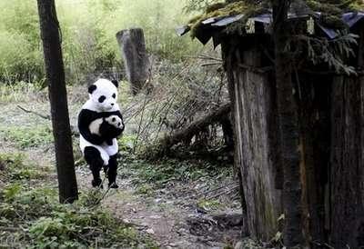 Le scientifique dévoué porte le bébé panda jusqu'au refuge pour le nourrir. © DR