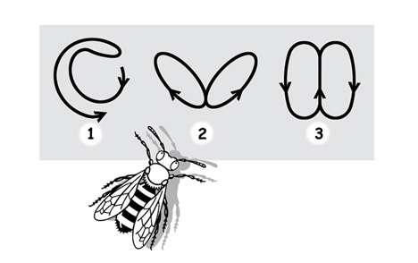 Les abeilles pratiquent différentes danses, chacune pour exprimer une idée. © Patrick Goulesque