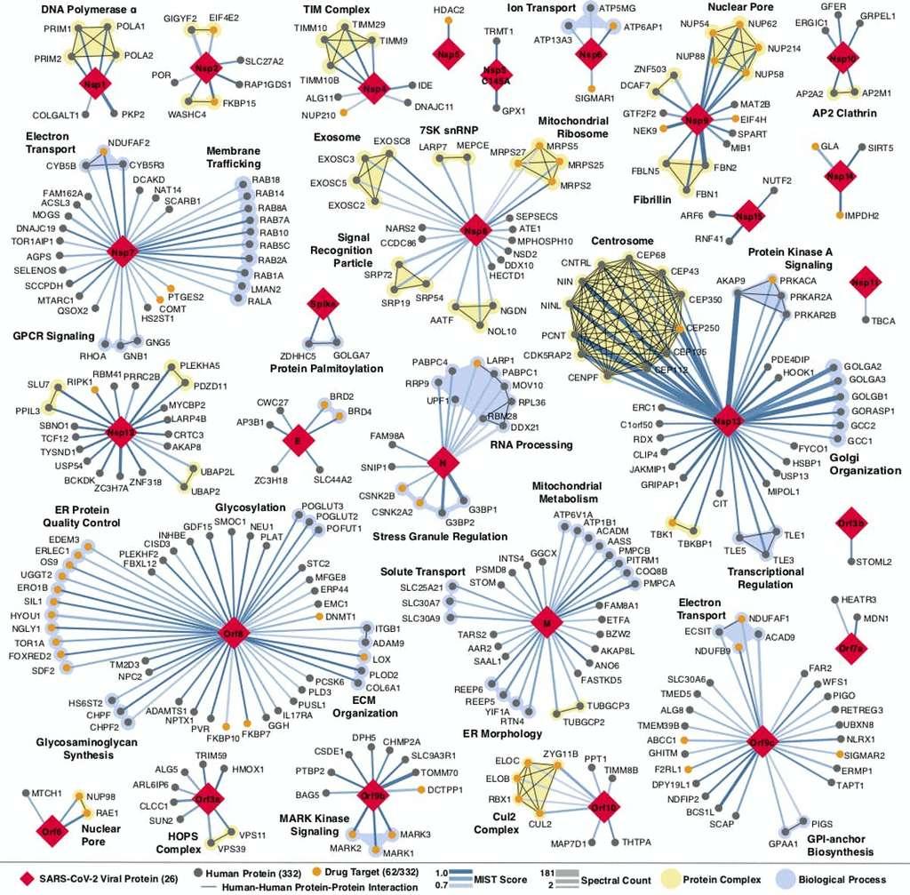 La carte géante des interactions entre le SARS-CoV-2 et les protéines humaines. © Nature